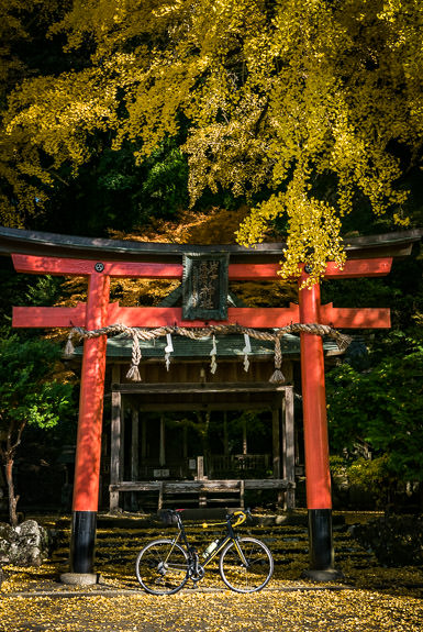 Getting Close, but Not Yet Peak Iwato Ochiba Shrine (岩戸落葉神社), Kyoto Japan -- Iwato Ochiba Shrine (岩戸落葉神社) -- Copyright 2016 Jeffrey Friedl, http://regex.info/blog/ -- This photo is licensed to the public under the Creative Commons Attribution-NonCommercial 4.0 International License http://creativecommons.org/licenses/by-nc/4.0/ (non-commercial use is freely allowed if proper attribution is given, including a link back to this page on http://regex.info/ when used online)