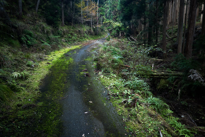 Slippery Moss with some road peeking through -- Kyoto, Japan -- Copyright 2016 Jeffrey Friedl, http://regex.info/blog/ -- This photo is licensed to the public under the Creative Commons Attribution-NonCommercial 4.0 International License http://creativecommons.org/licenses/by-nc/4.0/ (non-commercial use is freely allowed if proper attribution is given, including a link back to this page on http://regex.info/ when used online)