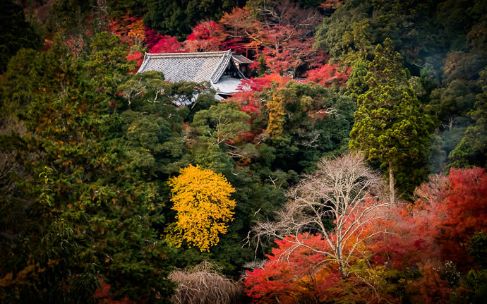 desktop background image of the roof of the Saimyoju Temple (西明寺), Kyoto Japan, during fall-foliage season -- Buried in Color Saimyoji Temple / 高尾の西明寺 -- Saimyoji Temple (西明寺) -- Copyright 2016 Jeffrey Friedl, http://regex.info/blog/ -- This photo is licensed to the public under the Creative Commons Attribution-NonCommercial 4.0 International License http://creativecommons.org/licenses/by-nc/4.0/ (non-commercial use is freely allowed if proper attribution is given, including a link back to this page on http://regex.info/ when used online)