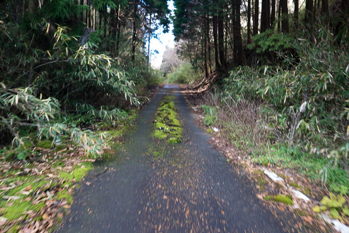 Mossy, but Passable Mima Pass (水間峠) 12:00pm - taken while cycling at 10 kph (7 mph) -- Mima Pass (水間峠) -- Nara, Japan -- Copyright 2016 Jeffrey Friedl, http://regex.info/blog/ -- This photo is licensed to the public under the Creative Commons Attribution-NonCommercial 4.0 International License http://creativecommons.org/licenses/by-nc/4.0/ (non-commercial use is freely allowed if proper attribution is given, including a link back to this page on http://regex.info/ when used online)