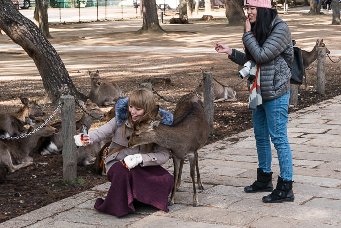 Kindly Posing with the selfie-taking girl -- Nara Park (奈良公園) -- Nara, Japan -- Copyright 2016 Jeffrey Friedl, http://regex.info/blog/ -- This photo is licensed to the public under the Creative Commons Attribution-NonCommercial 4.0 International License http://creativecommons.org/licenses/by-nc/4.0/ (non-commercial use is freely allowed if proper attribution is given, including a link back to this page on http://regex.info/ when used online)