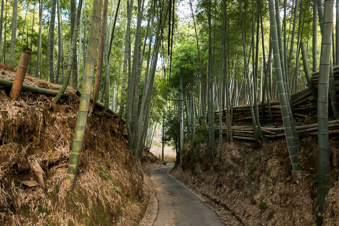 Road Sliced Through the Grove -- Muko, Kyoto, Japan -- Copyright 2017 Jeffrey Friedl, http://regex.info/blog/ -- This photo is licensed to the public under the Creative Commons Attribution-NonCommercial 4.0 International License http://creativecommons.org/licenses/by-nc/4.0/ (non-commercial use is freely allowed if proper attribution is given, including a link back to this page on http://regex.info/ when used online)