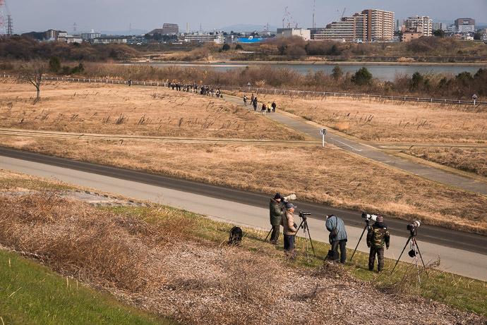Lots of Photographers lined up like this for kilometers -- Takatsuki, Osaka, Japan -- Copyright 2017 Jeffrey Friedl, http://regex.info/blog/ -- This photo is licensed to the public under the Creative Commons Attribution-NonCommercial 4.0 International License http://creativecommons.org/licenses/by-nc/4.0/ (non-commercial use is freely allowed if proper attribution is given, including a link back to this page on http://regex.info/ when used online)
