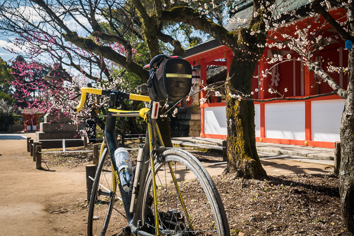 I don't wash my bike during the winter, it seems, and it shows -- Kitano Tenman-gu Shrine (北野天満宮) -- Kyoto, Japan -- Copyright 2017 Jeffrey Friedl, http://regex.info/blog/ -- This photo is licensed to the public under the Creative Commons Attribution-NonCommercial 4.0 International License http://creativecommons.org/licenses/by-nc/4.0/ (non-commercial use is freely allowed if proper attribution is given, including a link back to this page on http://regex.info/ when used online)