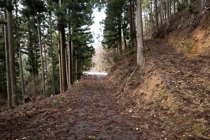 Super-Messy Road -- Nantan, Kyoto, Japan -- Copyright 2017 Jeffrey Friedl, http://regex.info/blog/ -- This photo is licensed to the public under the Creative Commons Attribution-NonCommercial 4.0 International License http://creativecommons.org/licenses/by-nc/4.0/ (non-commercial use is freely allowed if proper attribution is given, including a link back to this page on http://regex.info/ when used online)