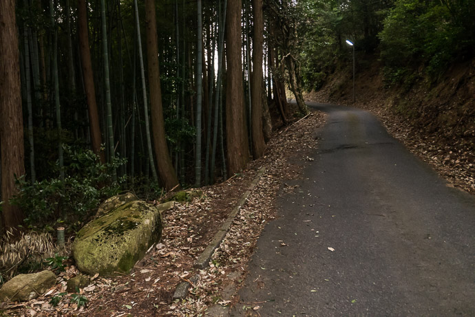 Rare mix of trees and bamboo 6:01 PM (from start: 10h 2m / 184 km / 114.3 miles) -- Yosa-gun -- Yosa-gun, Kyoto, Japan -- Copyright 2017 Jeffrey Friedl, http://regex.info/blog/