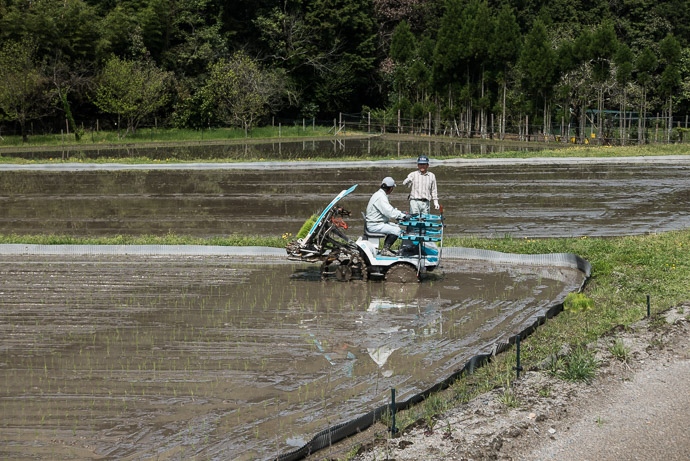 Planting Rice Seedlings -- Tsuzuki-gun -- Tsuzuki-gun, Kyoto, Japan -- Copyright 2017 Jeffrey Friedl, http://regex.info/blog/ -- This photo is licensed to the public under the Creative Commons Attribution-NonCommercial 4.0 International License http://creativecommons.org/licenses/by-nc/4.0/ (non-commercial use is freely allowed if proper attribution is given, including a link back to this page on http://regex.info/ when used online)