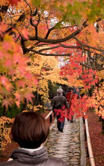 desktop background image of the entrance path to the Koetsu-ji Temple (光悦寺), Kyoto Japan, in autumn. -- Koetsu-ji Temple (光悦寺), Kyoto Japan -- Koetsu-ji Temple (光悦寺) -- Japan, Kyoto -- Copyright 2017 Jeffrey Friedl, http://regex.info/blog/ -- This photo is licensed to the public under the Creative Commons Attribution-NonCommercial 4.0 International License http://creativecommons.org/licenses/by-nc/4.0/ (non-commercial use is freely allowed if proper attribution is given, including a link back to this page on http://regex.info/ when used online)