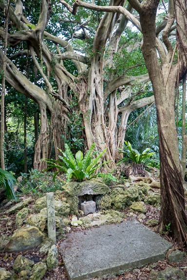 Spooky Shrine/Tree off the beaten path -- Nanjo, Okinawa, Japan -- Copyright 2018 Jeffrey Friedl, http://regex.info/blog/