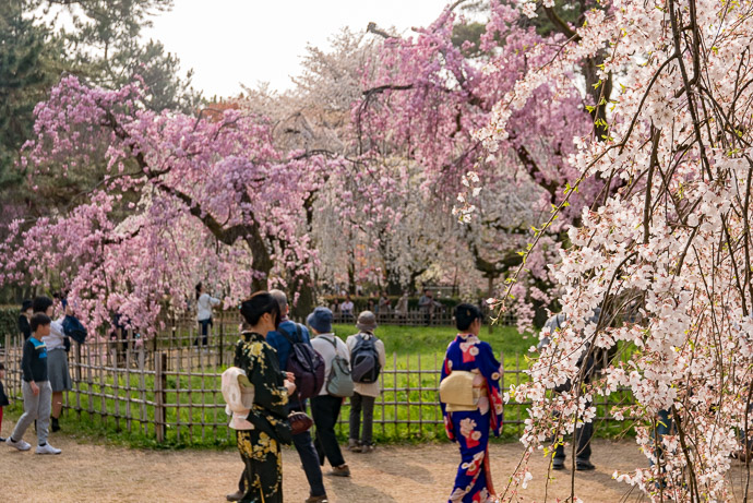 Kyoto Imperial Palace Park (京都御所公園) -- Kyoto, Japan -- Copyright 2018 Jeffrey Friedl, http://regex.info/blog/ -- This photo is licensed to the public under the Creative Commons Attribution-NonCommercial 4.0 International License http://creativecommons.org/licenses/by-nc/4.0/ (non-commercial use is freely allowed if proper attribution is given, including a link back to this page on http://regex.info/ when used online)