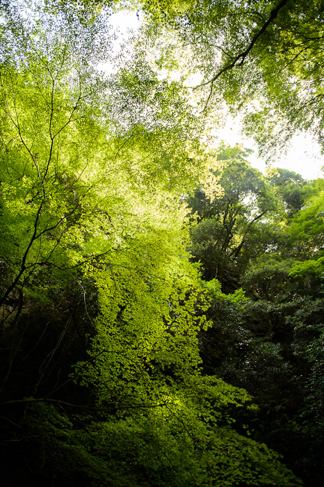 Canopy  --  Kuuya-taki Waterfall (空也滝)  --  Kyoto, Japan  --  Copyright 2012 Jeffrey Friedl, http://regex.info/blog/