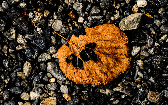 desktop background image of a leaf on the ground  --  Clich side of Gritty  --  Myouhouin Temple ()  --  Kyoto, Japan  --  Copyright 2012 Jeffrey Friedl, http://regex.info/blog/  --  This photo is licensed to the public under the Creative Commons Attribution-NonCommercial 3.0 Unported License http://creativecommons.org/licenses/by-nc/3.0/ (non-commercial use is freely allowed if proper attribution is given, including a link back to this page on http://regex.info/ when used online)