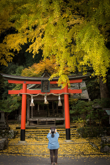 Shooting with an iPad  --  Ochiba Jinja ()  --  Kyoto, Japan  --  Copyright 2012 Jeffrey Friedl, http://regex.info/blog/  --  This photo is licensed to the public under the Creative Commons Attribution-NonCommercial 3.0 Unported License http://creativecommons.org/licenses/by-nc/3.0/ (non-commercial use is freely allowed if proper attribution is given, including a link back to this page on http://regex.info/ when used online)