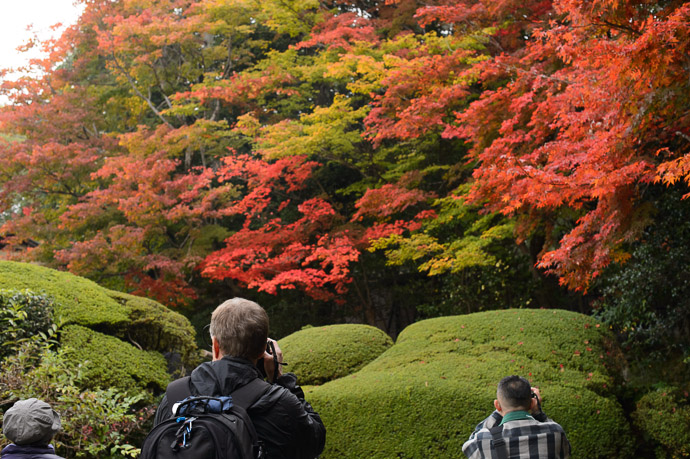 Lots of Color Nov 15, a week or so before peak  --  Shisendo Temple (詩仙堂)  --  Kyoto, Japan  --  Copyright 2012 Jeffrey Friedl, http://regex.info/blog/  --  This photo is licensed to the public under the Creative Commons Attribution-NonCommercial 3.0 Unported License http://creativecommons.org/licenses/by-nc/3.0/ (non-commercial use is freely allowed if proper attribution is given, including a link back to this page on http://regex.info/ when used online)