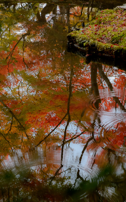 desktop background image of fall colors reflected in the pond in the main garden of the Enkouji Temple (圓光寺), Kyoto Japan -- Pond -- Enkouji Temple (圓光寺) -- Copyright 2012 Jeffrey Friedl, http://regex.info/blog/ -- This photo is licensed to the public under the Creative Commons Attribution-NonCommercial 3.0 Unported License http://creativecommons.org/licenses/by-nc/3.0/ (non-commercial use is freely allowed if proper attribution is given, including a link back to this page on http://regex.info/ when used online)