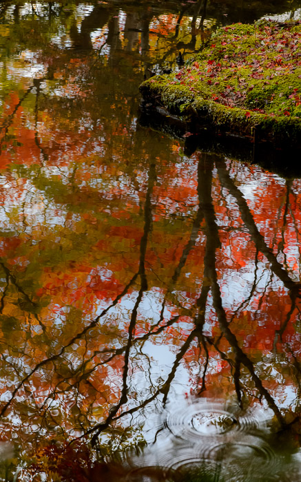 desktop background image of a fall-foliage garden scene from the Enkoji Temple (), Kyoto Japan -- Drips -- Enkouji Temple () -- Copyright 2012 Jeffrey Friedl, http://regex.info/blog/ -- This photo is licensed to the public under the Creative Commons Attribution-NonCommercial 3.0 Unported License http://creativecommons.org/licenses/by-nc/3.0/ (non-commercial use is freely allowed if proper attribution is given, including a link back to this page on http://regex.info/ when used online)