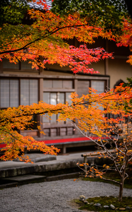 desktop background image of a fall-foliage garden scene from the Enkoji Temple (), Kyoto Japan -- Low Hanging -- Enkouji Temple () -- Copyright 2012 Jeffrey Friedl, http://regex.info/blog/ -- This photo is licensed to the public under the Creative Commons Attribution-NonCommercial 3.0 Unported License http://creativecommons.org/licenses/by-nc/3.0/ (non-commercial use is freely allowed if proper attribution is given, including a link back to this page on http://regex.info/ when used online)