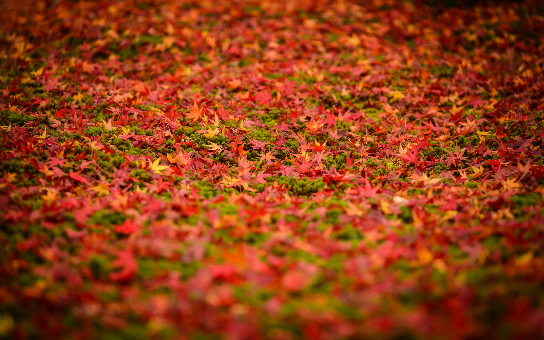 Jeffrey friedls blog more japanese garden desktop backgrounds 28801800 desktop background voltagebd Images
