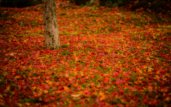 desktop background image of a fall-foliage garden scene from the Enkoji Temple (), Kyoto Japan -- Hemmed In Enkouji Temple () -- Enkouji Temple () -- Copyright 2012 Jeffrey Friedl, http://regex.info/blog/ -- This photo is licensed to the public under the Creative Commons Attribution-NonCommercial 3.0 Unported License http://creativecommons.org/licenses/by-nc/3.0/ (non-commercial use is freely allowed if proper attribution is given, including a link back to this page on http://regex.info/ when used online)