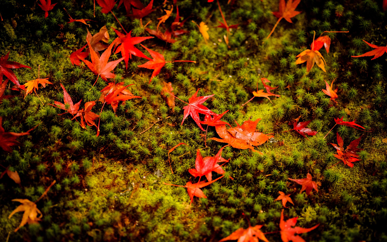 Jeffrey Friedl\'s Blog » More Japanese-Garden Desktop Backgrounds ...