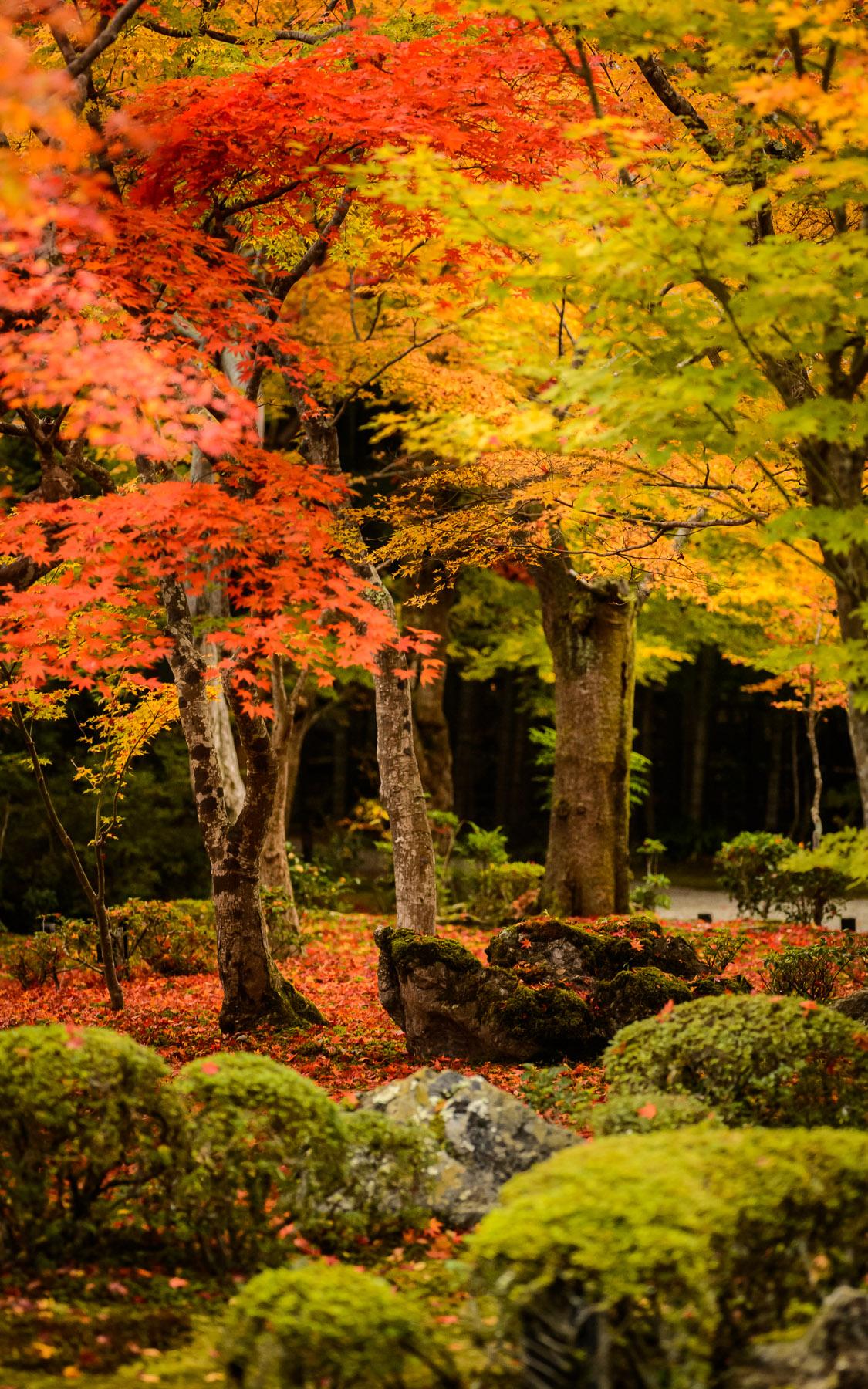 Jeffrey Friedl S Blog 187 The Gorgeous Enkouji Temple Of