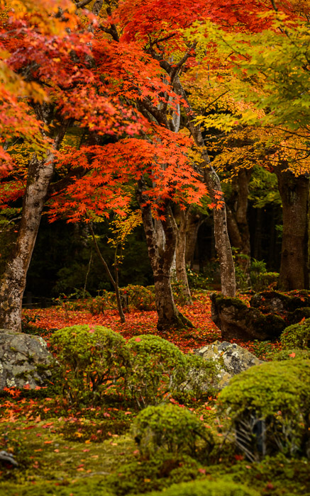 desktop background image of a fall-foliage garden scene from the Enkoji Temple (), Kyoto Japan -- Lots Going On Enkouji Temple () -- Enkouji Temple () -- Copyright 2012 Jeffrey Friedl, http://regex.info/blog/ -- This photo is licensed to the public under the Creative Commons Attribution-NonCommercial 3.0 Unported License http://creativecommons.org/licenses/by-nc/3.0/ (non-commercial use is freely allowed if proper attribution is given, including a link back to this page on http://regex.info/ when used online)