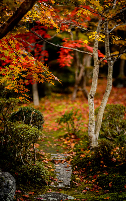 desktop background image of a fall-foliage garden scene from the Enkoji Temple (), Kyoto Japan -- Narrow Path Enkouji Temple () -- Enkouji Temple () -- Copyright 2012 Jeffrey Friedl, http://regex.info/blog/ -- This photo is licensed to the public under the Creative Commons Attribution-NonCommercial 3.0 Unported License http://creativecommons.org/licenses/by-nc/3.0/ (non-commercial use is freely allowed if proper attribution is given, including a link back to this page on http://regex.info/ when used online)