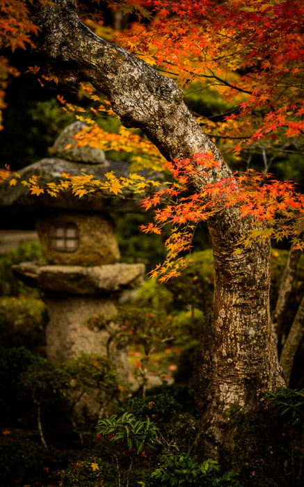 desktop background image of a fall-foliage garden scene from the Enkoji Temple (), Kyoto Japan -- Old Tree Enkouji Temple () -- Enkouji Temple () -- Copyright 2012 Jeffrey Friedl, http://regex.info/blog/ -- This photo is licensed to the public under the Creative Commons Attribution-NonCommercial 3.0 Unported License http://creativecommons.org/licenses/by-nc/3.0/ (non-commercial use is freely allowed if proper attribution is given, including a link back to this page on http://regex.info/ when used online)