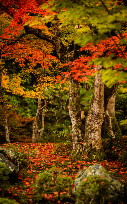desktop background image of a fall-foliage garden scene from the Enkoji Temple (), Kyoto Japan -- Nothing Specific but somehow still pretty -- Enkouji Temple () -- Copyright 2012 Jeffrey Friedl, http://regex.info/blog/ -- This photo is licensed to the public under the Creative Commons Attribution-NonCommercial 3.0 Unported License http://creativecommons.org/licenses/by-nc/3.0/ (non-commercial use is freely allowed if proper attribution is given, including a link back to this page on http://regex.info/ when used online)