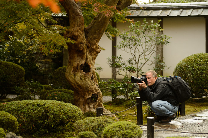 A Wild Paul in its natural environment  --  Enkouji Temple (圓光寺)  --  Kyoto, Japan  --  Copyright 2012 Jeffrey Friedl, http://regex.info/blog/  --  This photo is licensed to the public under the Creative Commons Attribution-NonCommercial 3.0 Unported License http://creativecommons.org/licenses/by-nc/3.0/ (non-commercial use is freely allowed if proper attribution is given, including a link back to this page on http://regex.info/ when used online)