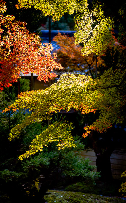 desktop background image of a fall-foliage scene at the Shouzan Resort (しょうざん), Kyoto Japan  --  Razor Sharp  --  Shouzan (しょうざん)  --  Copyright 2012 Jeffrey Friedl, http://regex.info/blog/  --  This photo is licensed to the public under the Creative Commons Attribution-NonCommercial 3.0 Unported License http://creativecommons.org/licenses/by-nc/3.0/ (non-commercial use is freely allowed if proper attribution is given, including a link back to this page on http://regex.info/ when used online)
