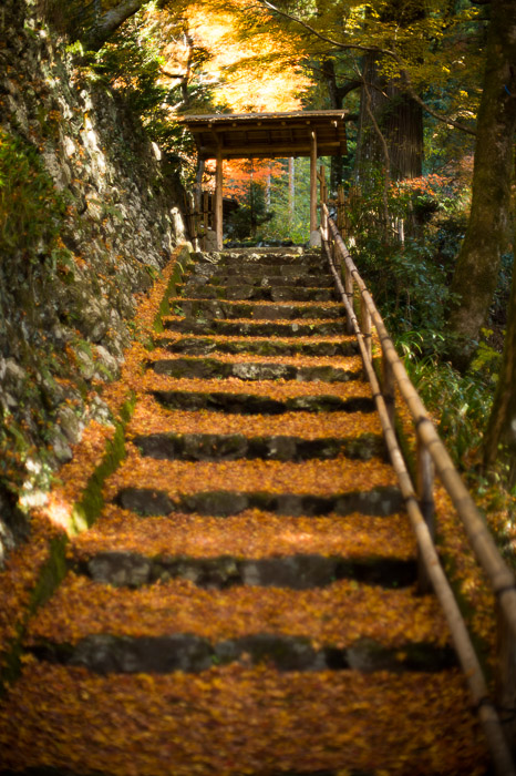 Entrance Steps after the turn  --  Sourenji Temple (宗蓮寺)  --  Kyoto, Japan  --  Copyright 2012 Jeffrey Friedl, http://regex.info/blog/  --  This photo is licensed to the public under the Creative Commons Attribution-NonCommercial 3.0 Unported License http://creativecommons.org/licenses/by-nc/3.0/ (non-commercial use is freely allowed if proper attribution is given, including a link back to this page on http://regex.info/ when used online)