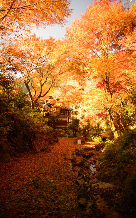 desktop background image of a foll-foliage scene at the Sourenji Temple (), Kyoto Japan  --  Unretouched back corner of Kyoto's Sourenji Temple () Straight out of the camera. (except for white balance, set in post via a gray -card reference shot)  --  Sourenji Temple ()  --  Copyright 2012 Jeffrey Friedl, http://regex.info/blog/2012-11-26/2152  --  This photo is licensed to the public under the Creative Commons Attribution-NonCommercial 3.0 Unported License http://creativecommons.org/licenses/by-nc/3.0/ (non-commercial use is freely allowed if proper attribution is given, including a link back to this page on http://regex.info/ when used online)