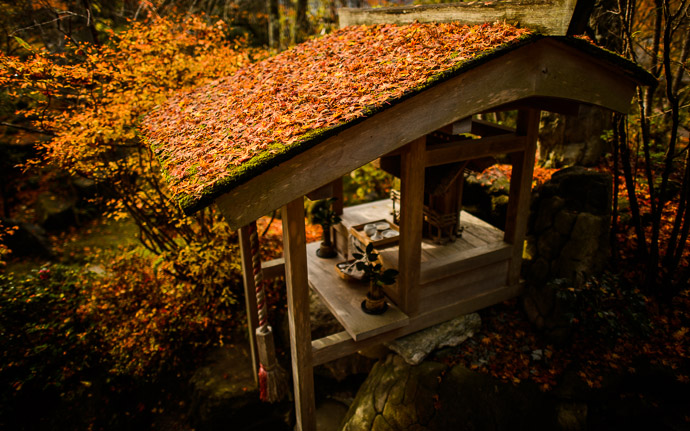 desktop background image of a fall-foliage garden scene at the Housen-in Temple (宝泉院), Kyoto Japan  --  Mini Shrine with quite the photogenic roof, layered in moss and maple leaves  --  Housen-in Temple (宝泉院)  --  Copyright 2012 Jeffrey Friedl, http://regex.info/blog/2013-02-16/2211  --  This photo is licensed to the public under the Creative Commons Attribution-NonCommercial 3.0 Unported License http://creativecommons.org/licenses/by-nc/3.0/ (non-commercial use is freely allowed if proper attribution is given, including a link back to this page on http://regex.info/ when used online)