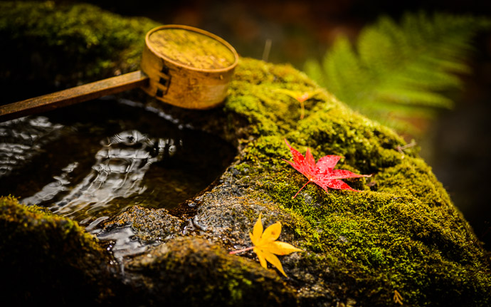 desktop background image of a fall-foliage garden scene at the Housen-in Temple (宝泉院), Kyoto Japan  --  Rough-Hewn Tsukubai garden basin at the Housen-in Temple (宝泉院), Kyoto Japan  --  Housen-in Temple (宝泉院)  --  Copyright 2012 Jeffrey Friedl, http://regex.info/blog/2013-02-16/2211  --  This photo is licensed to the public under the Creative Commons Attribution-NonCommercial 3.0 Unported License http://creativecommons.org/licenses/by-nc/3.0/ (non-commercial use is freely allowed if proper attribution is given, including a link back to this page on http://regex.info/ when used online)