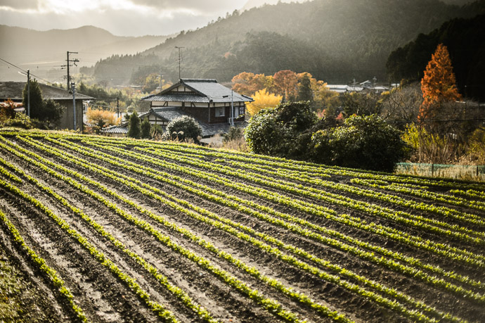 Small Farm Near the Sanzen-in Temple (三千院), Ohara Village, Kyoto Japan — Nov 2012 -- Near the Sanzen-in Temple (三千院) -- Copyright 2012 Jeffrey Friedl, http://regex.info/blog/ -- This photo is licensed to the public under the Creative Commons Attribution-NonCommercial 4.0 International License http://creativecommons.org/licenses/by-nc/4.0/ (non-commercial use is freely allowed if proper attribution is given, including a link back to this page on http://regex.info/ when used online)