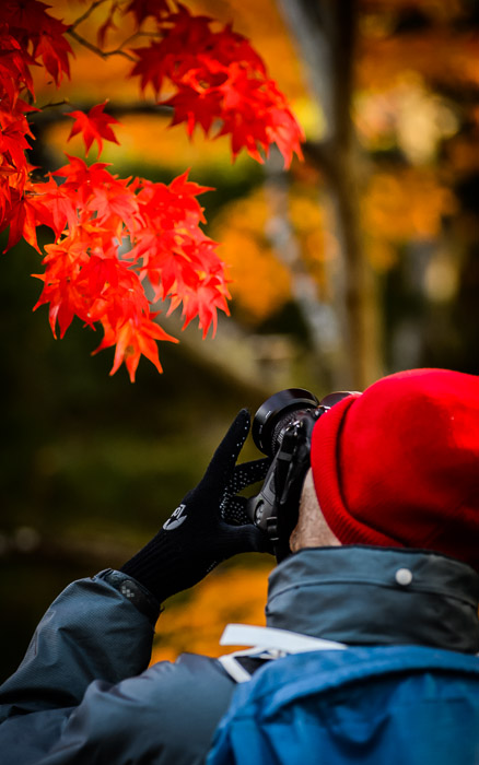 desktop background image of a fall-foliage scene at the Shugakuin Imperial Villa (修学院離宮), Kyoto Japan  --  Way Too Red Damien 's hat was deep red, but the leaves were much deeper still ( and so their color overwhelmed the camera sensor , washing them out :-()  --  Shugakuin Imperial Villa (修学院離宮)  --  Copyright 2012 Jeffrey Friedl, http://regex.info/blog/  --  This photo is licensed to the public under the Creative Commons Attribution-NonCommercial 3.0 Unported License http://creativecommons.org/licenses/by-nc/3.0/ (non-commercial use is freely allowed if proper attribution is given, including a link back to this page on http://regex.info/ when used online)