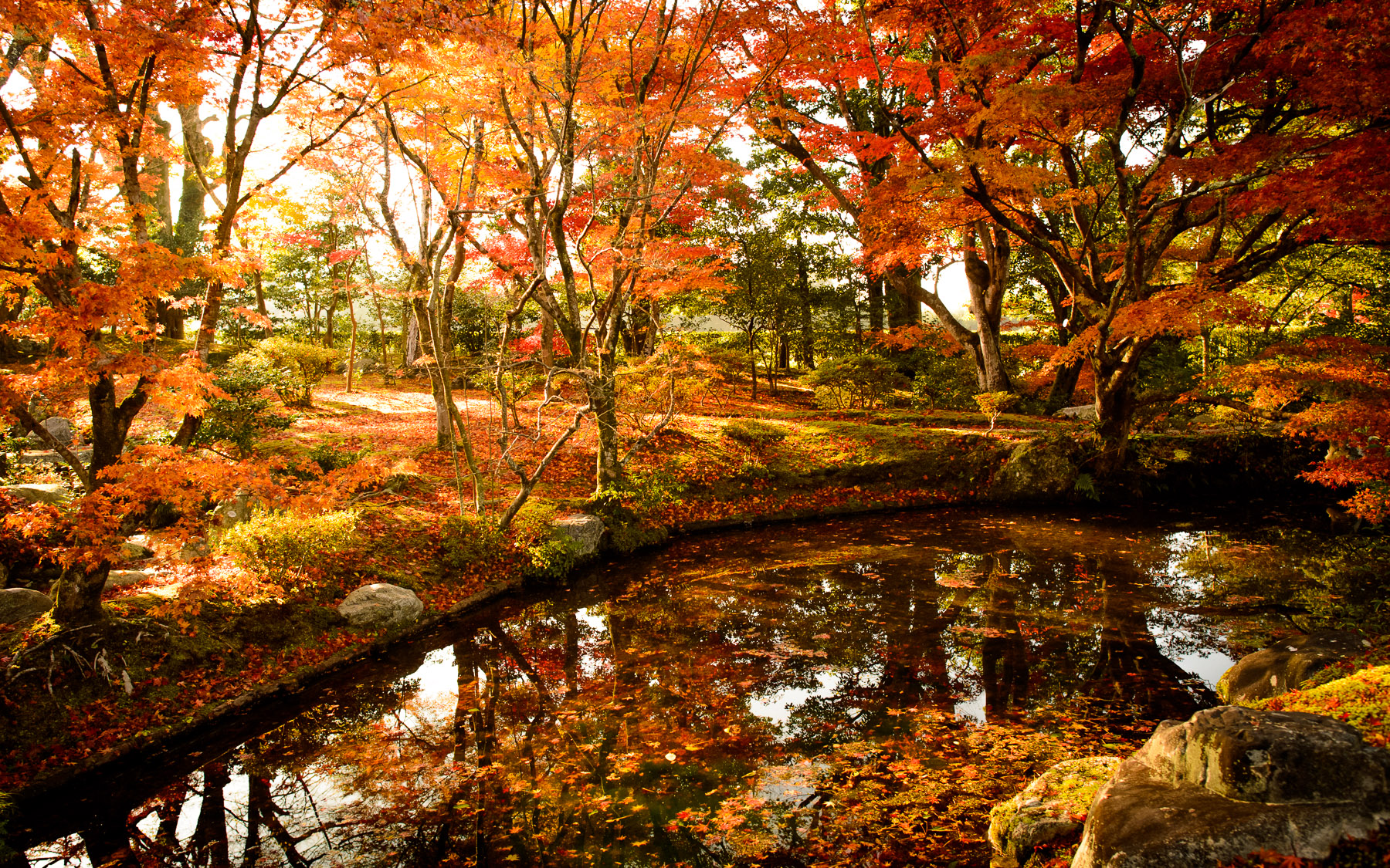 Kyoto photo shugaku in with spectacular fall foliage - Jardines japoneses fotos ...