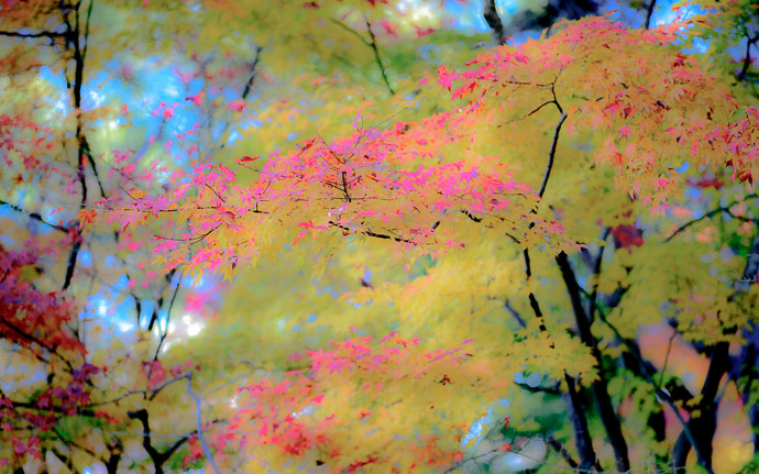desktop background image of a fall-foliage scene at the Shugakuin Imperial Villa (修学院離宮), Kyoto Japan  --  Something a bit Different just futzing around in Lightroom  --  Shugakuin Imperial Villa (修学院離宮)  --  Copyright 2012 Jeffrey Friedl, http://regex.info/blog/  --  This photo is licensed to the public under the Creative Commons Attribution-NonCommercial 3.0 Unported License http://creativecommons.org/licenses/by-nc/3.0/ (non-commercial use is freely allowed if proper attribution is given, including a link back to this page on http://regex.info/ when used online)