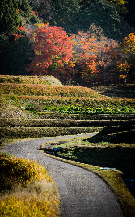 desktop background image of a fall-foliage scene at the Shugakuin Imperial Villa (修学院離宮), Kyoto Japan  --  Farmer's Path  --  Shugakuin Imperial Villa (修学院離宮)  --  Copyright 2012 Jeffrey Friedl, http://regex.info/blog/  --  This photo is licensed to the public under the Creative Commons Attribution-NonCommercial 3.0 Unported License http://creativecommons.org/licenses/by-nc/3.0/ (non-commercial use is freely allowed if proper attribution is given, including a link back to this page on http://regex.info/ when used online)