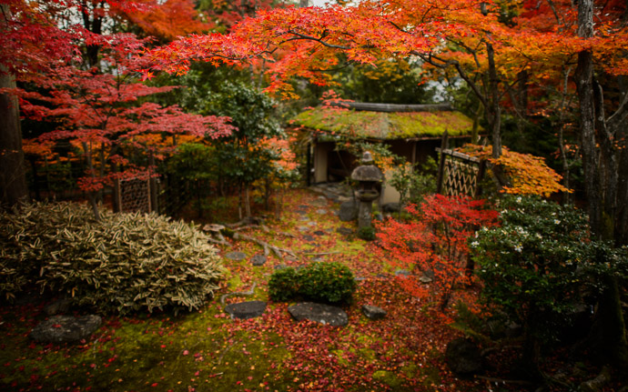desktop background image of a fall-foliage scene at the Daihouin Temple (妙心寺大法院), Kyoto Japan  --  The View  --  Daihouin Temple (大法院)  --  Copyright 2012 Jeffrey Friedl, http://regex.info/blog/  --  This photo is licensed to the public under the Creative Commons Attribution-NonCommercial 3.0 Unported License http://creativecommons.org/licenses/by-nc/3.0/ (non-commercial use is freely allowed if proper attribution is given, including a link back to this page on http://regex.info/ when used online)