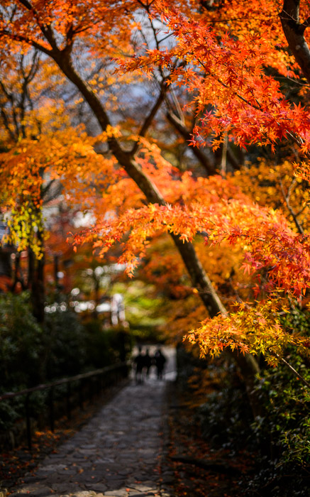 desktop background image of a fall-color scene at the Suzumushidera Temple (鈴虫寺), Kyoto Japan  --  Looking Back Down  --  Suzumushidera (鈴虫寺)  --  Copyright 2012 Jeffrey Friedl, http://regex.info/blog/  --  This photo is licensed to the public under the Creative Commons Attribution-NonCommercial 3.0 Unported License http://creativecommons.org/licenses/by-nc/3.0/ (non-commercial use is freely allowed if proper attribution is given, including a link back to this page on http://regex.info/ when used online)