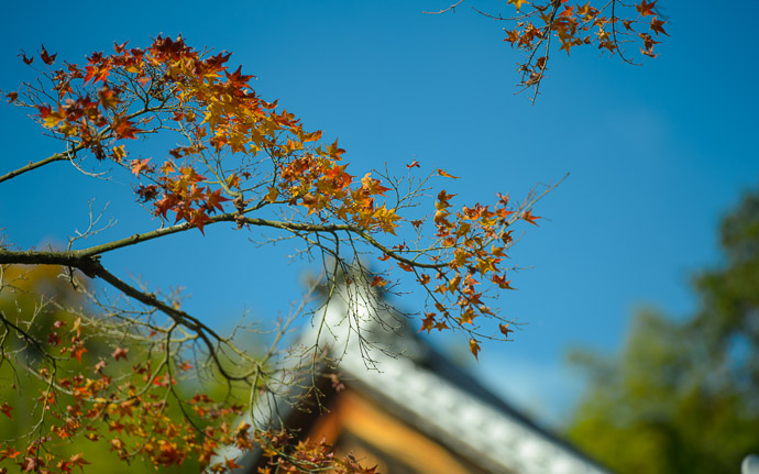 desktop background image of a fall-color scene at the Suzumushidera Temple (鈴虫寺), Kyoto Japan  --  Suzumushidera (鈴虫寺)  --  Copyright 2012 Jeffrey Friedl, http://regex.info/blog/  --  This photo is licensed to the public under the Creative Commons Attribution-NonCommercial 3.0 Unported License http://creativecommons.org/licenses/by-nc/3.0/ (non-commercial use is freely allowed if proper attribution is given, including a link back to this page on http://regex.info/ when used online)