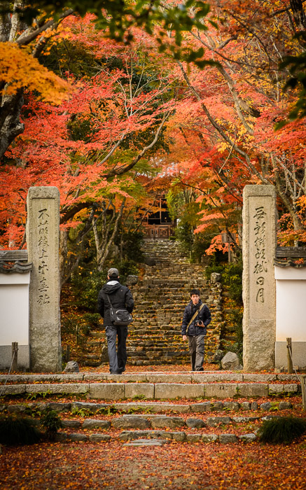 desktop background image of the entrance path to the Jojuji Temple (浄住寺、京都市嵐山) in Kyoto, Japan, bathed in fall colors -- Coming and Going entrance to the Jojuji Temple, Kyoto Japan December, 2012 浄住寺(京都市嵐山)、2012年12月 -- Jojuji Temple (浄住寺 -- Copyright 2012 Jeffrey Friedl, http://regex.info/blog/ -- This photo is licensed to the public under the Creative Commons Attribution-NonCommercial 4.0 International License http://creativecommons.org/licenses/by-nc/4.0/ (non-commercial use is freely allowed if proper attribution is given, including a link back to this page on http://regex.info/ when used online)