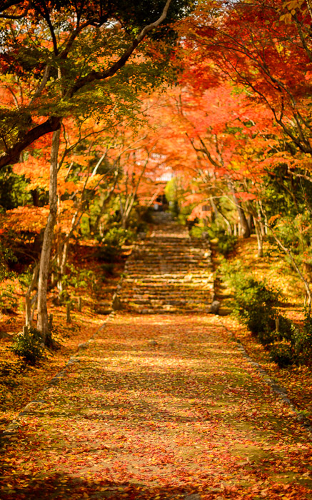 desktop background image of the entrance path to the Jojuji Temple (浄住寺、京都市嵐山) in Kyoto, Japan, bathed in fall colors -- Sundrenched 「太陽の降り注ぐ」? -- Jojuji Temple (浄住寺 -- Copyright 2012 Jeffrey Friedl, http://regex.info/blog/ -- This photo is licensed to the public under the Creative Commons Attribution-NonCommercial 4.0 International License http://creativecommons.org/licenses/by-nc/4.0/ (non-commercial use is freely allowed if proper attribution is given, including a link back to this page on http://regex.info/ when used online)