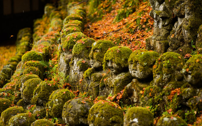 desktop background image of moss-covered statues at the delightful Otaginenbutsuji Temple (愛宕念仏寺) in Kyoto Japan -- Among Friends -- Otaginenbutsuji Temple (愛宕念仏寺) -- Copyright 2012 Jeffrey Friedl, http://regex.info/blog/ -- This photo is licensed to the public under the Creative Commons Attribution-NonCommercial 4.0 International License http://creativecommons.org/licenses/by-nc/4.0/ (non-commercial use is freely allowed if proper attribution is given, including a link back to this page on http://regex.info/ when used online)