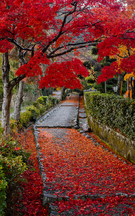 desktop background image of a fall-foliage scene in the Arashiyama area of Kyoto, Japan ()  --  Public Street Arashiyama () area of Kyoto, Japan  --  Arashiyama ()  --  Copyright 2012 Jeffrey Friedl, http://regex.info/blog/  --  This photo is licensed to the public under the Creative Commons Attribution-NonCommercial 3.0 Unported License http://creativecommons.org/licenses/by-nc/3.0/ (non-commercial use is freely allowed if proper attribution is given, including a link back to this page on http://regex.info/ when used online)