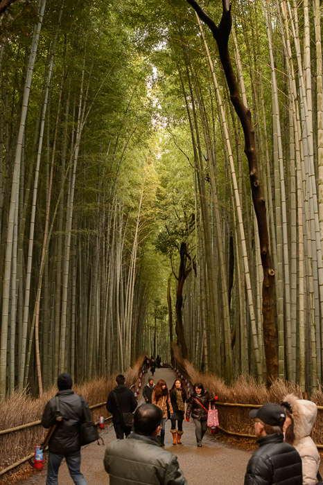 Milling About 35 minutes before the start at the Arashiyama Bamboo Forest (嵐山竹 やぶ), Kyoto Japan  --  Arashiyama Bamboo Forest (嵐山竹やぶ)  --  Copyright 2012 Jeffrey Friedl, http://regex.info/blog/  --  This photo is licensed to the public under the Creative Commons Attribution-NonCommercial 3.0 Unported License http://creativecommons.org/licenses/by-nc/3.0/ (non-commercial use is freely allowed if proper attribution is given, including a link back to this page on http://regex.info/ when used online)