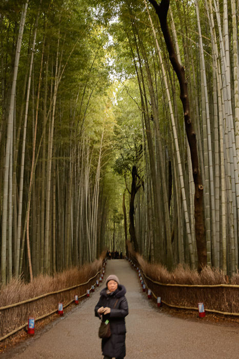 Oblivious  --  Arashiyama Bamboo Forest (嵐山竹やぶ)  --  Kyoto, Japan  --  Copyright 2012 Jeffrey Friedl, http://regex.info/blog/  --  This photo is licensed to the public under the Creative Commons Attribution-NonCommercial 3.0 Unported License http://creativecommons.org/licenses/by-nc/3.0/ (non-commercial use is freely allowed if proper attribution is given, including a link back to this page on http://regex.info/ when used online)