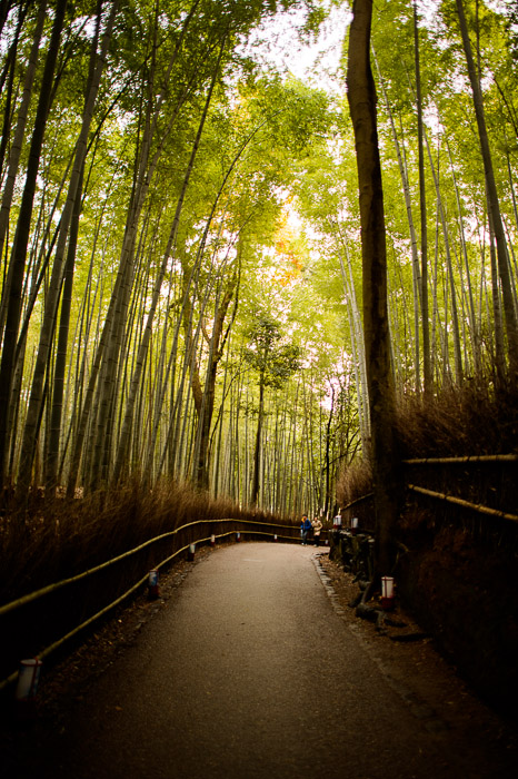 Hilly  --  Arashiyama Bamboo Forest (嵐山竹やぶ)  --  Kyoto, Japan  --  Copyright 2012 Jeffrey Friedl, http://regex.info/blog/  --  This photo is licensed to the public under the Creative Commons Attribution-NonCommercial 3.0 Unported License http://creativecommons.org/licenses/by-nc/3.0/ (non-commercial use is freely allowed if proper attribution is given, including a link back to this page on http://regex.info/ when used online)